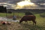 La vache_Alamode_Szenenbild 2